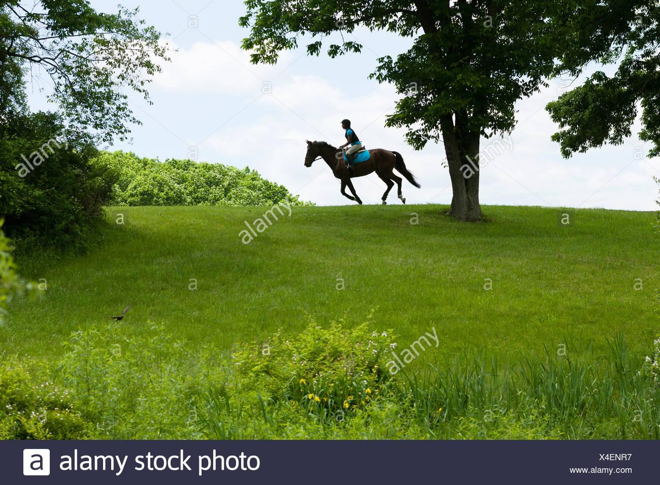Horse Rider équitation à travers un paysage de champ Photo Stock