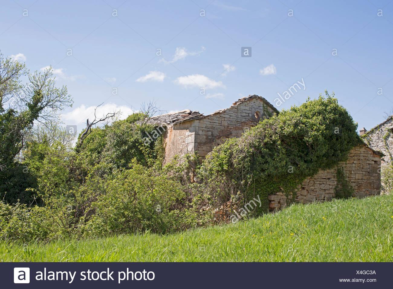 Maisons abandonnées et vefallene avec des plantes envahies idylliques caractérisent le paysage idyllique Banque D'Images