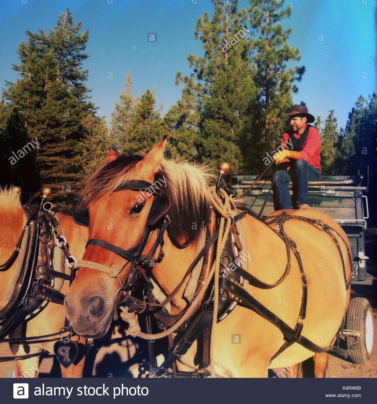 Cowboy assis dans la calèche Photo Stock