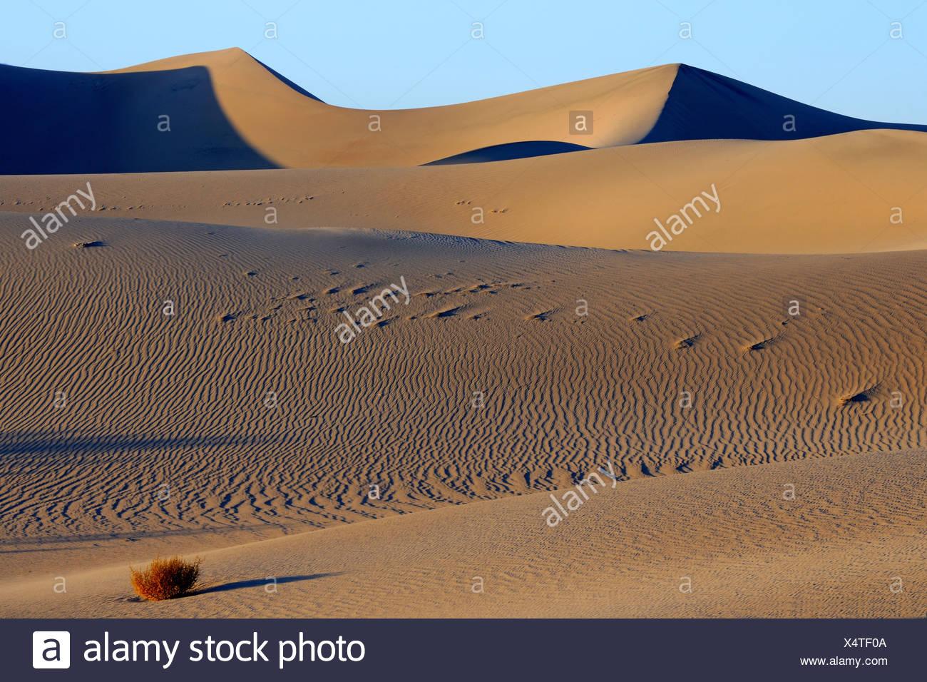 Mesquite Flat Dunes au lever du soleil, la Death Valley National Park, California, USA Banque D'Images