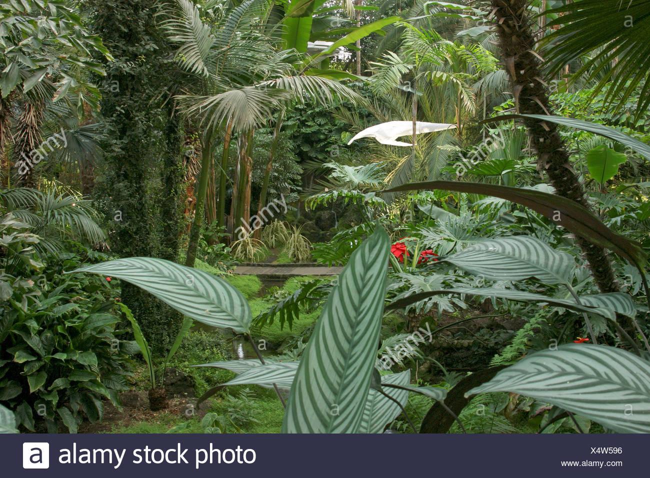 Jungle artificielle et objet d'art dans la serre du parc Palmengarten Palmenhaus Francfort, Hesse, Allemagne Photo Stock