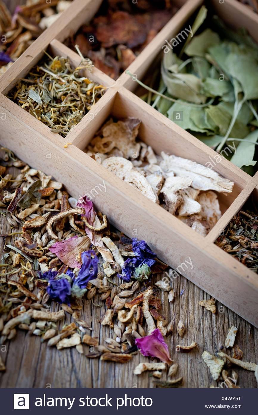 Un assortiment de plantes médicinales. Photo Stock