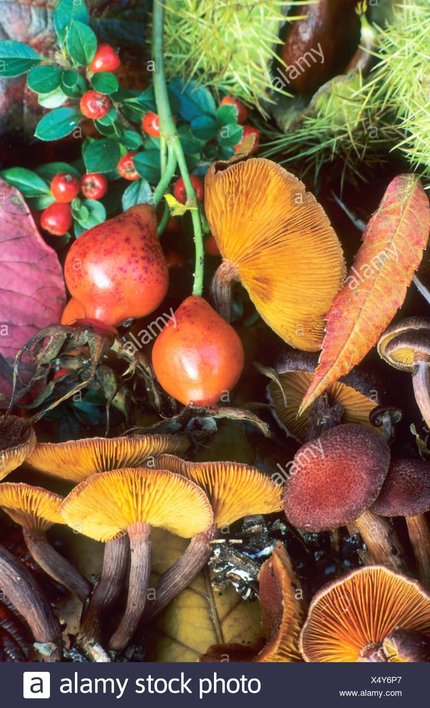 La vie encore automne champignons fruits Photo Stock
