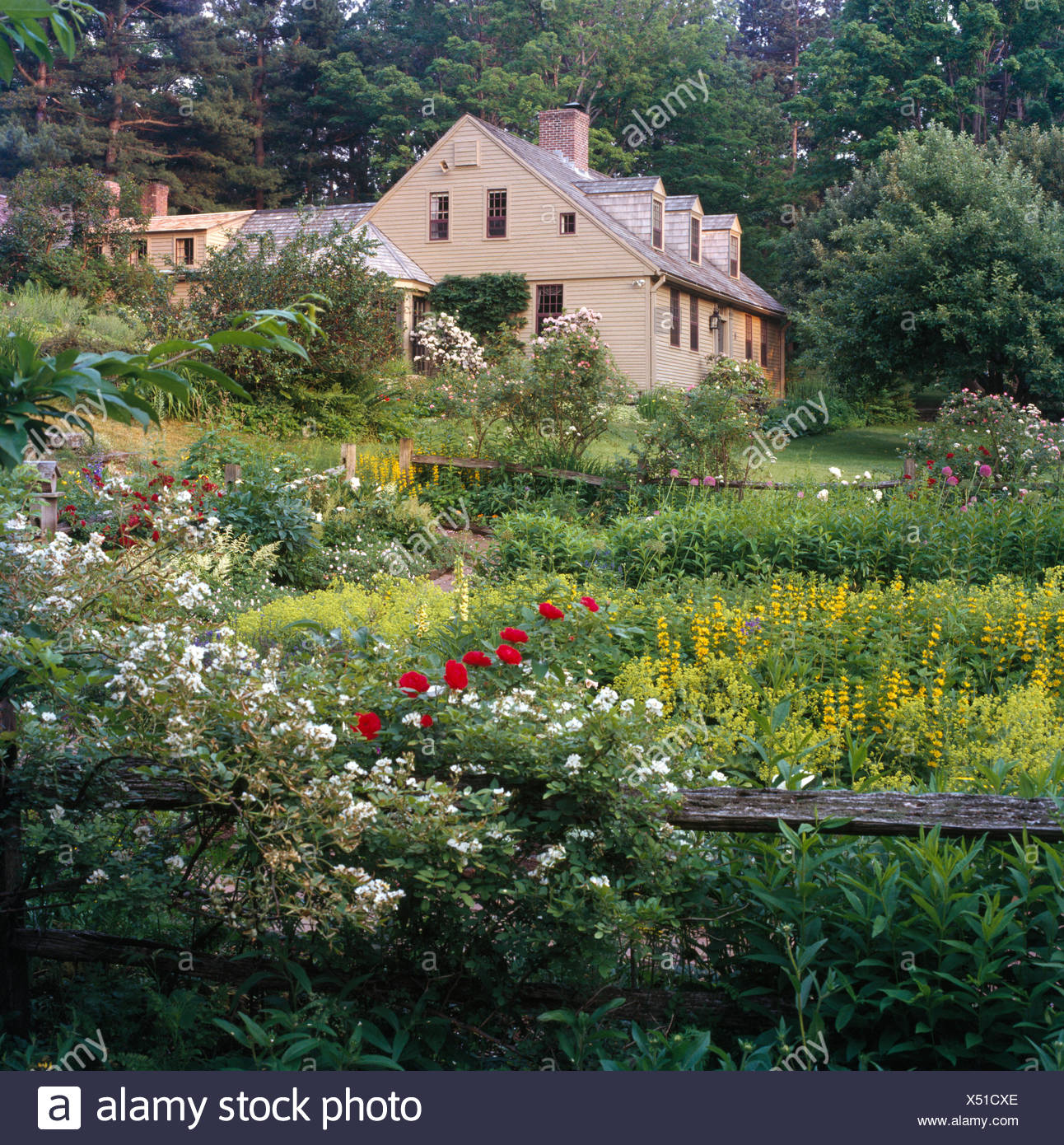 Des roses blanches qui poussent sur une clôture en bois rustique en ...
