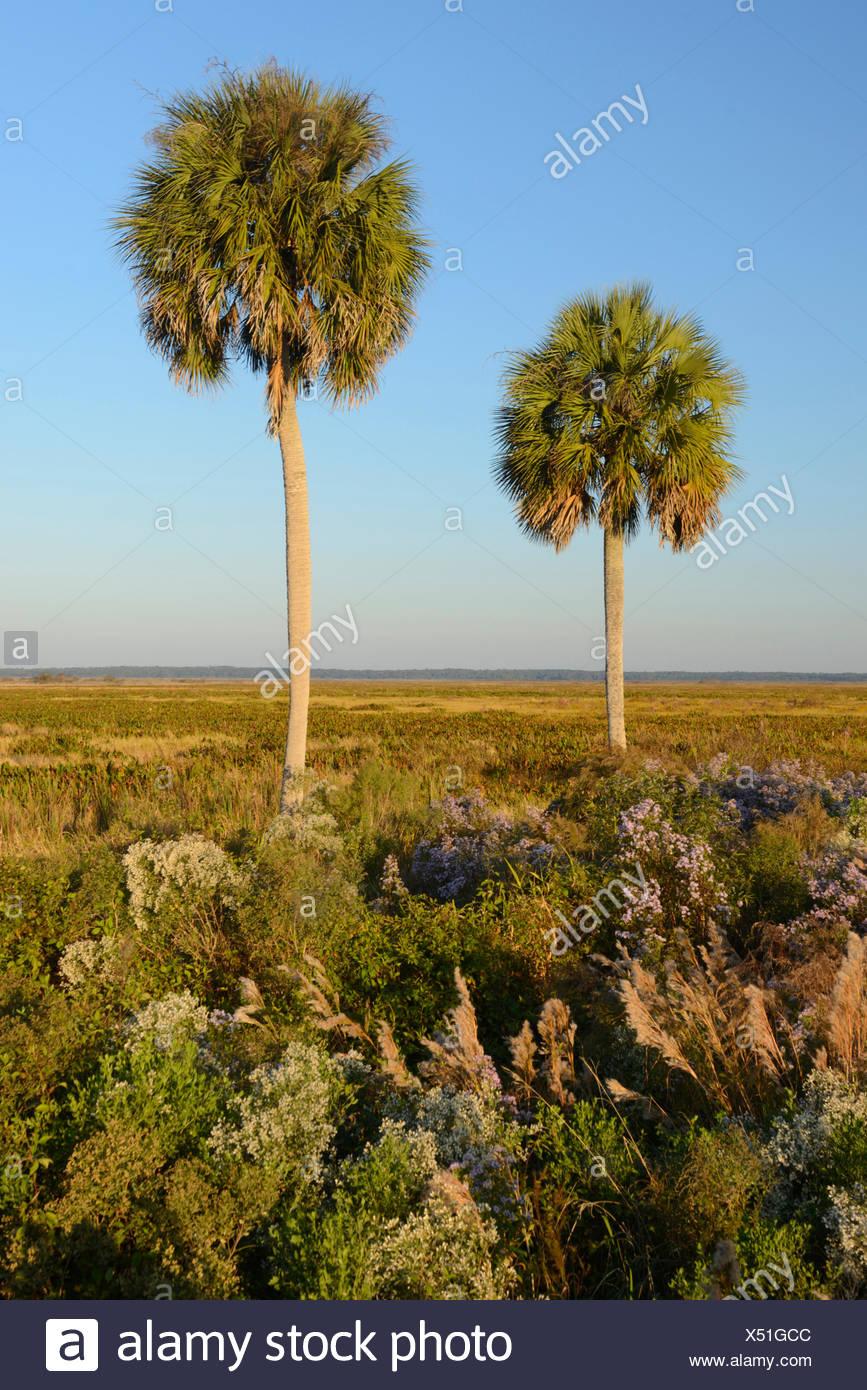 USA, Floride, Alachua Comté, Prairie à Paynes, State Park, près de Gainesville Photo Stock