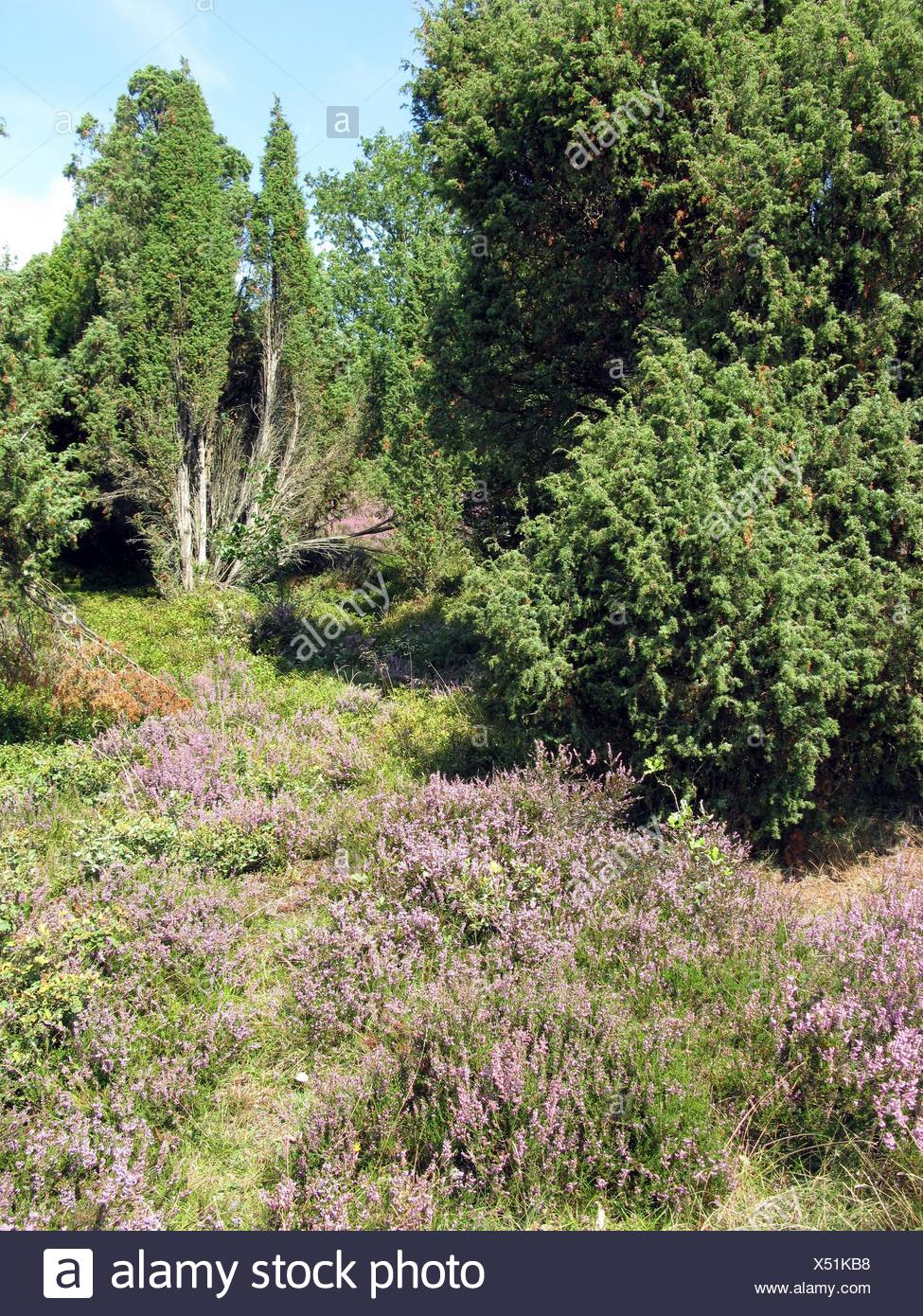 Plante, la conservation de la nature, nature-Sanctuary, attraction touristique, le nord du Banque D'Images