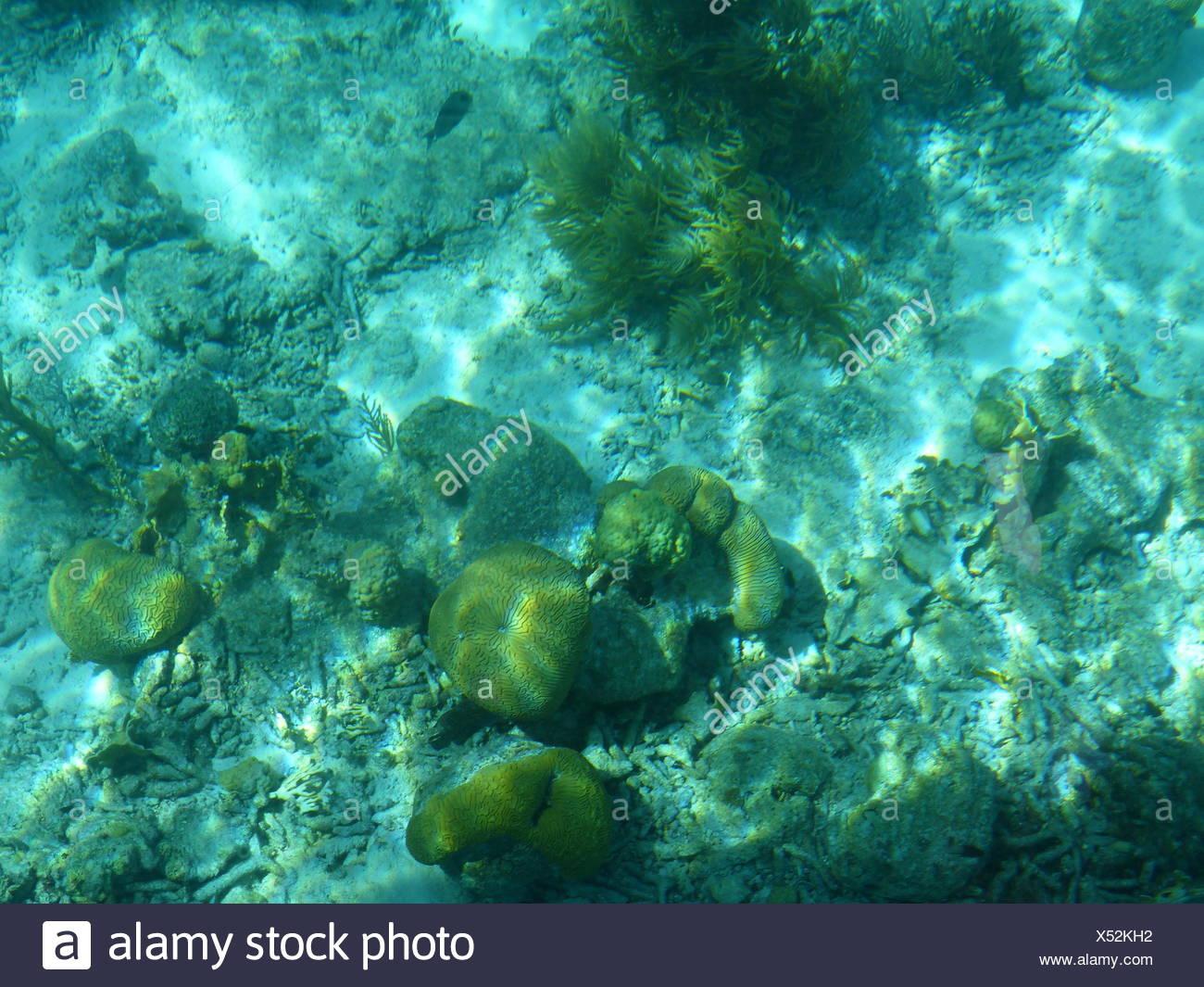 Les récifs coralliens au large de Klein Bonaire Banque D'Images