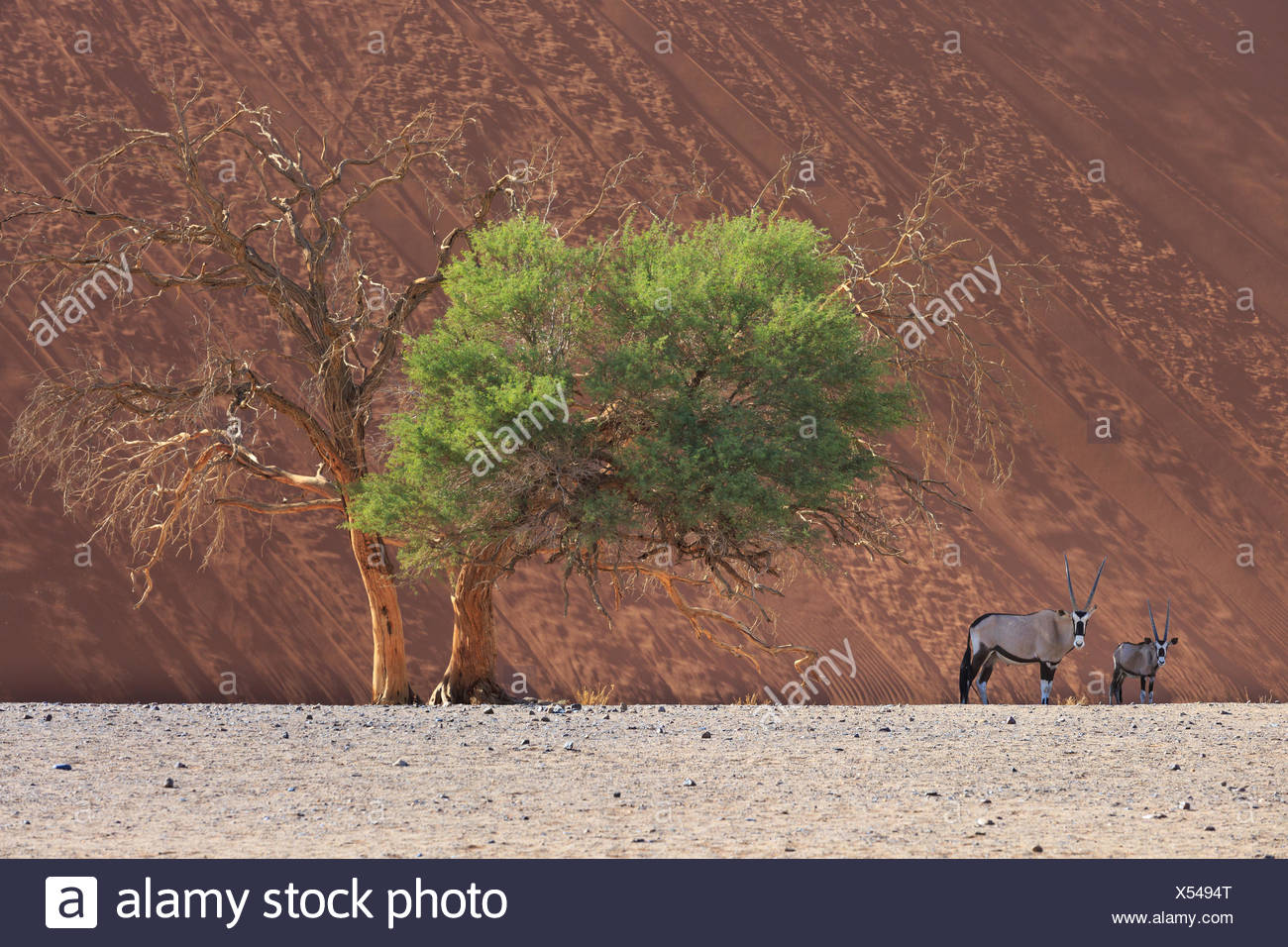 Sossusvlei, Parc National Namib Naukluft, Namibie Photo Stock