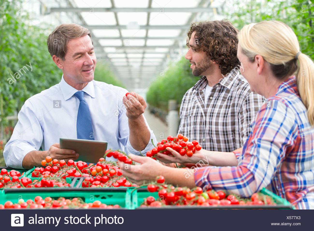 Businessman with digital tablet et les cultivateurs de tomates rouges mûres de l'inspection des émissions de Photo Stock