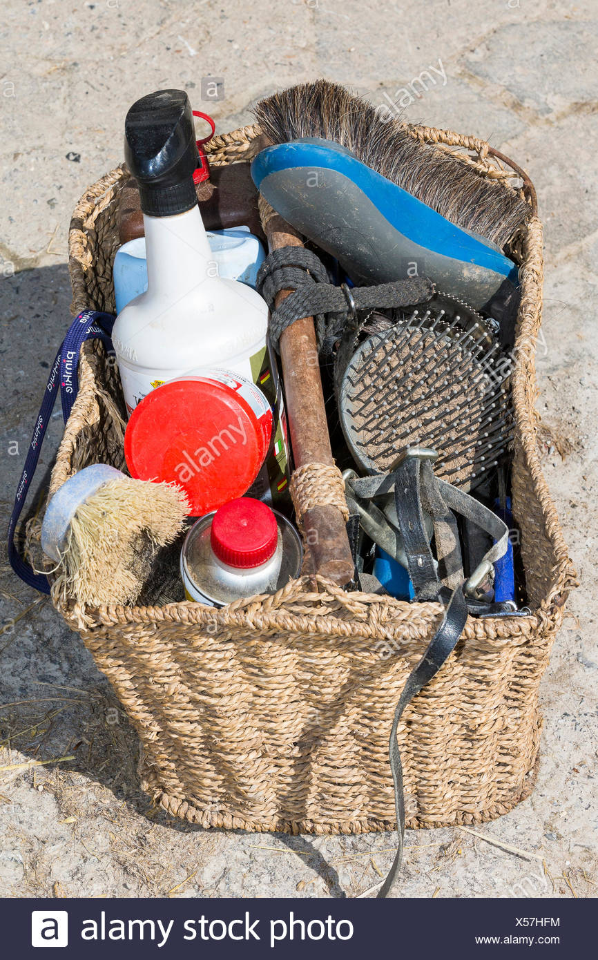 Cheval domestique kit de toilettage Photo Stock