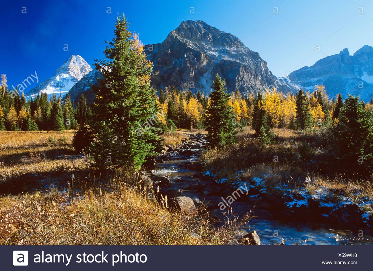 Le parc provincial du mont Assiniboine à l'automne, en Colombie-Britannique, Canada. Banque D'Images