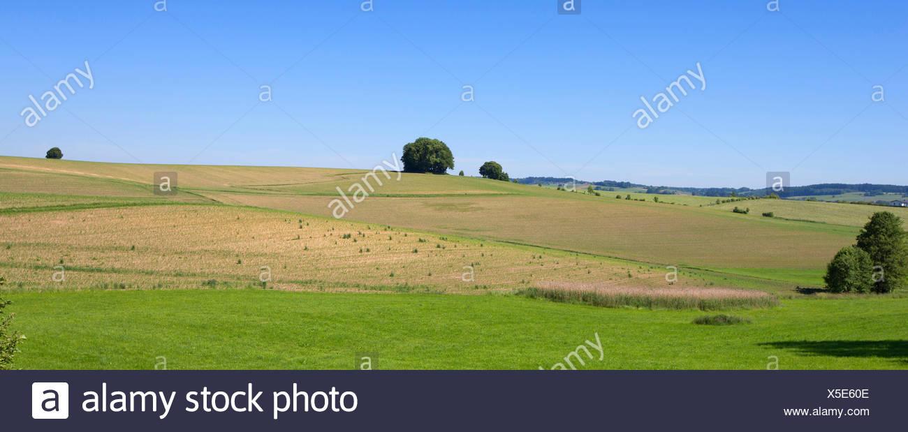 Le maïs, le maïs (Zea mays), la monoculture du maïs, de l'Allemagne, de Bavière, Isental Photo Stock