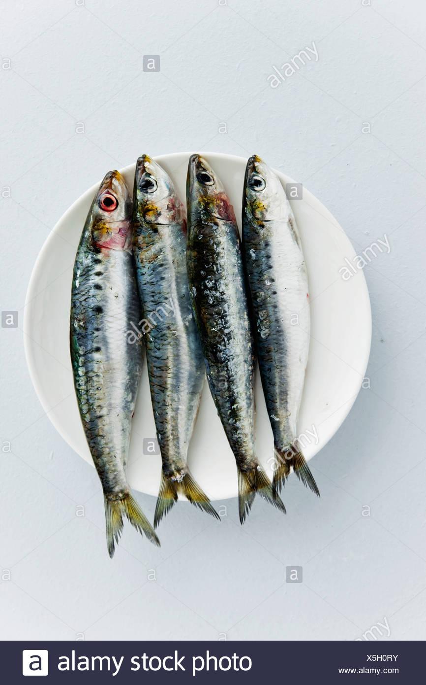 Sardine Photo Stock
