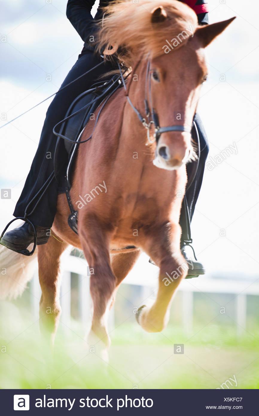 Cheval brun avec rider Photo Stock