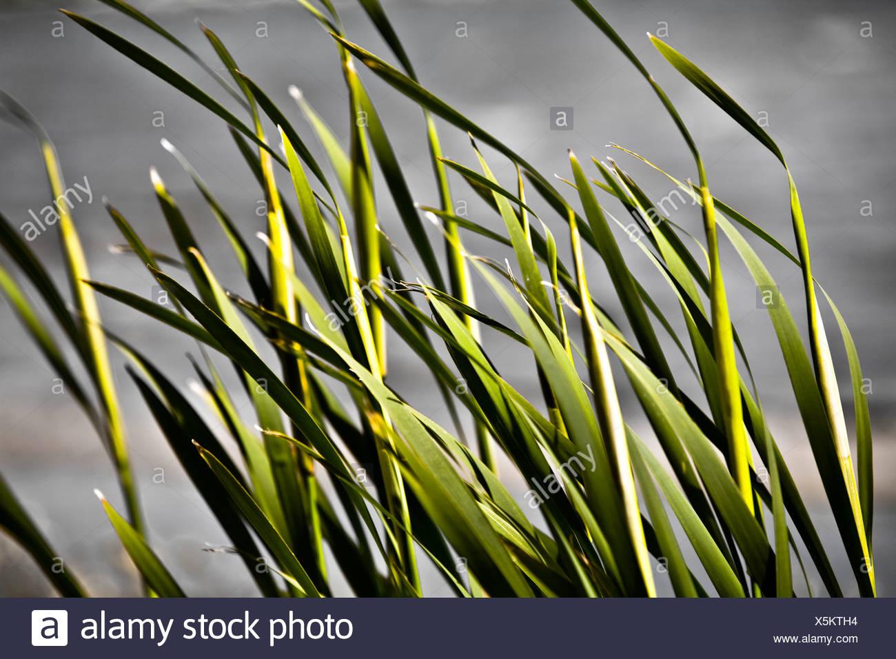 Libre de brins d'herbe Banque D'Images