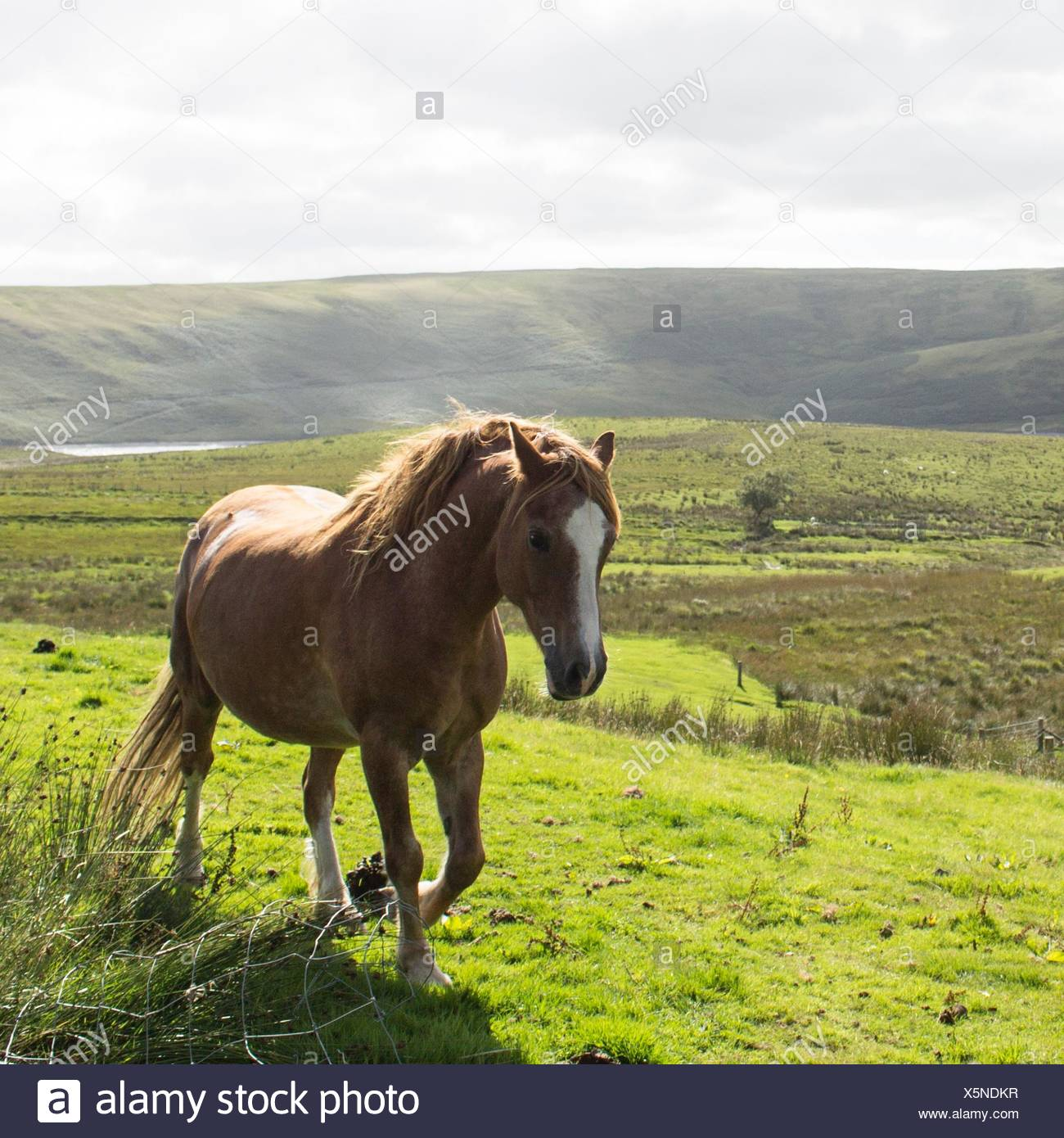 Cheval en campagne Photo Stock