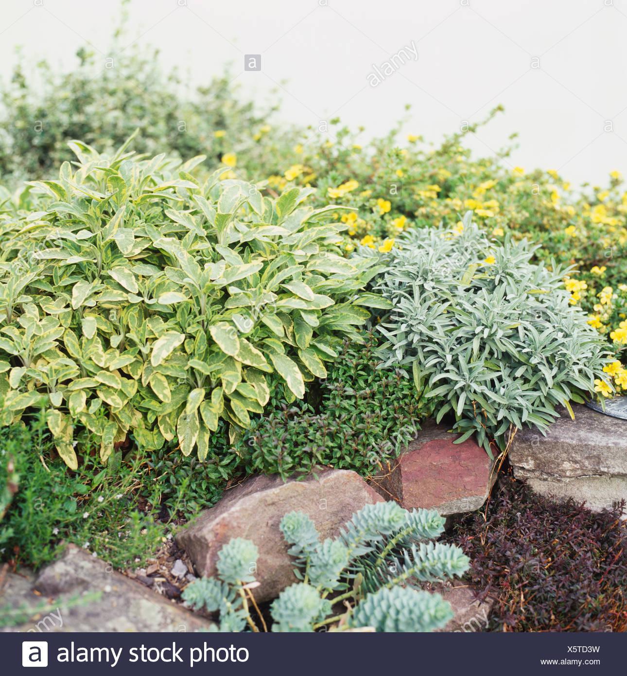 Jardin de rocaille conçue pour faire face au sud ou au sud-ouest, la ...