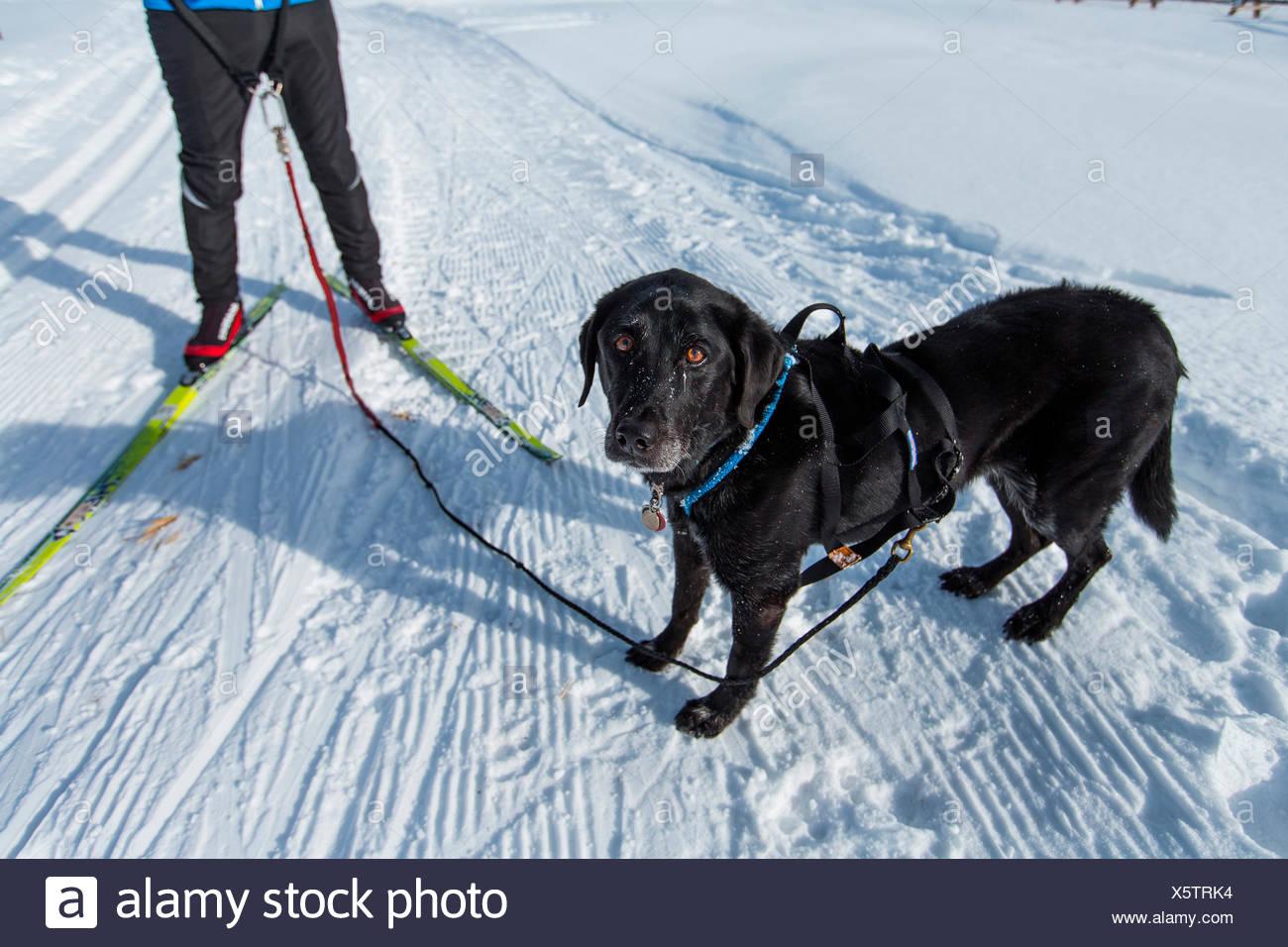 Colorado Ski Banque D'Images