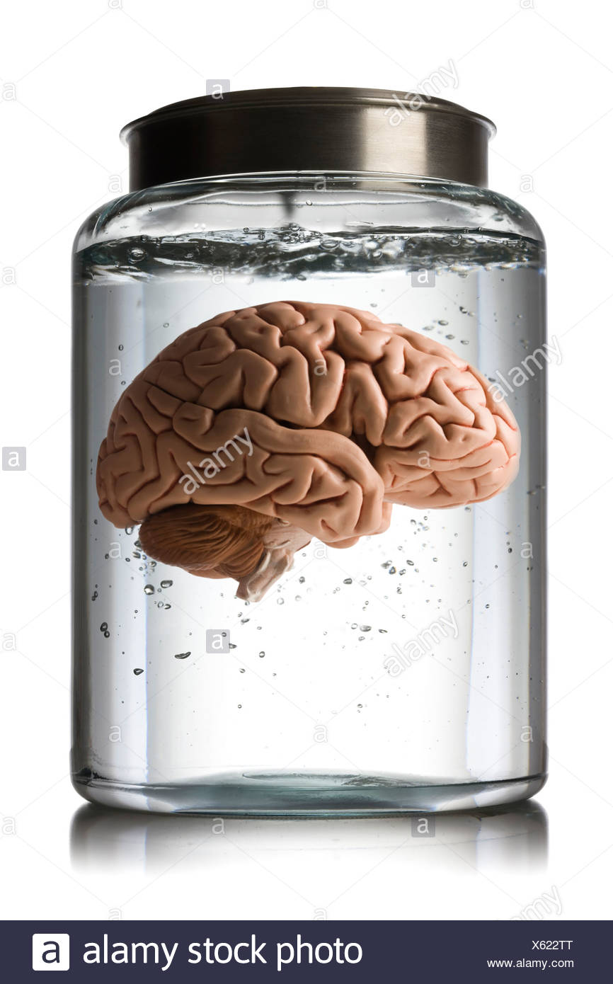 cerveau dans un bocal Photo Stock