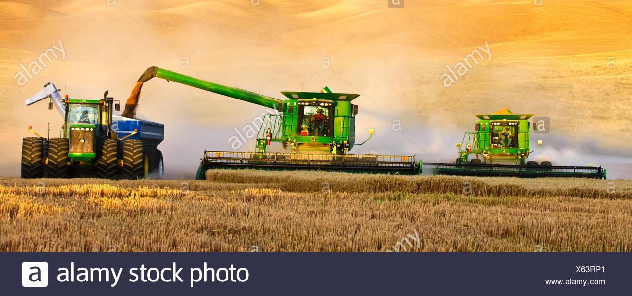 """Deux moissonneuses-batteuses John Deere en tandem la récolte de blé dans la lumière de fin d'après-midi alors qu'une décharge dans un chariot de céréales """"à la volée"""" / USA. Photo Stock"""