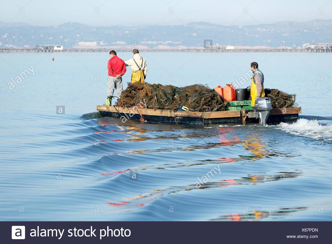 Les pêcheurs de moules mettre en prise au lever du soleil, Delta de l'Ebre, Tarragona. Tous les non-usages de rédaction doivent être effacés individuellement. Photo Stock