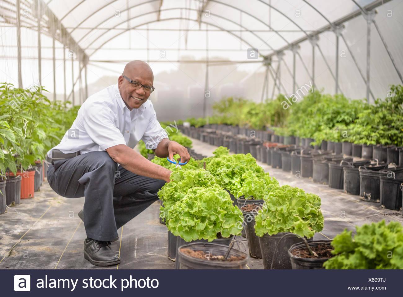 Portrait de manager dans la ferme hydroponique à Nevis, West Indies Banque D'Images