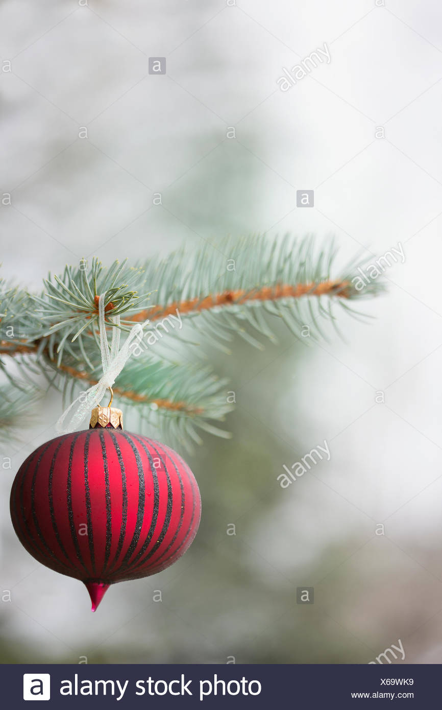 Red ornament hanging from tree branch Photo Stock