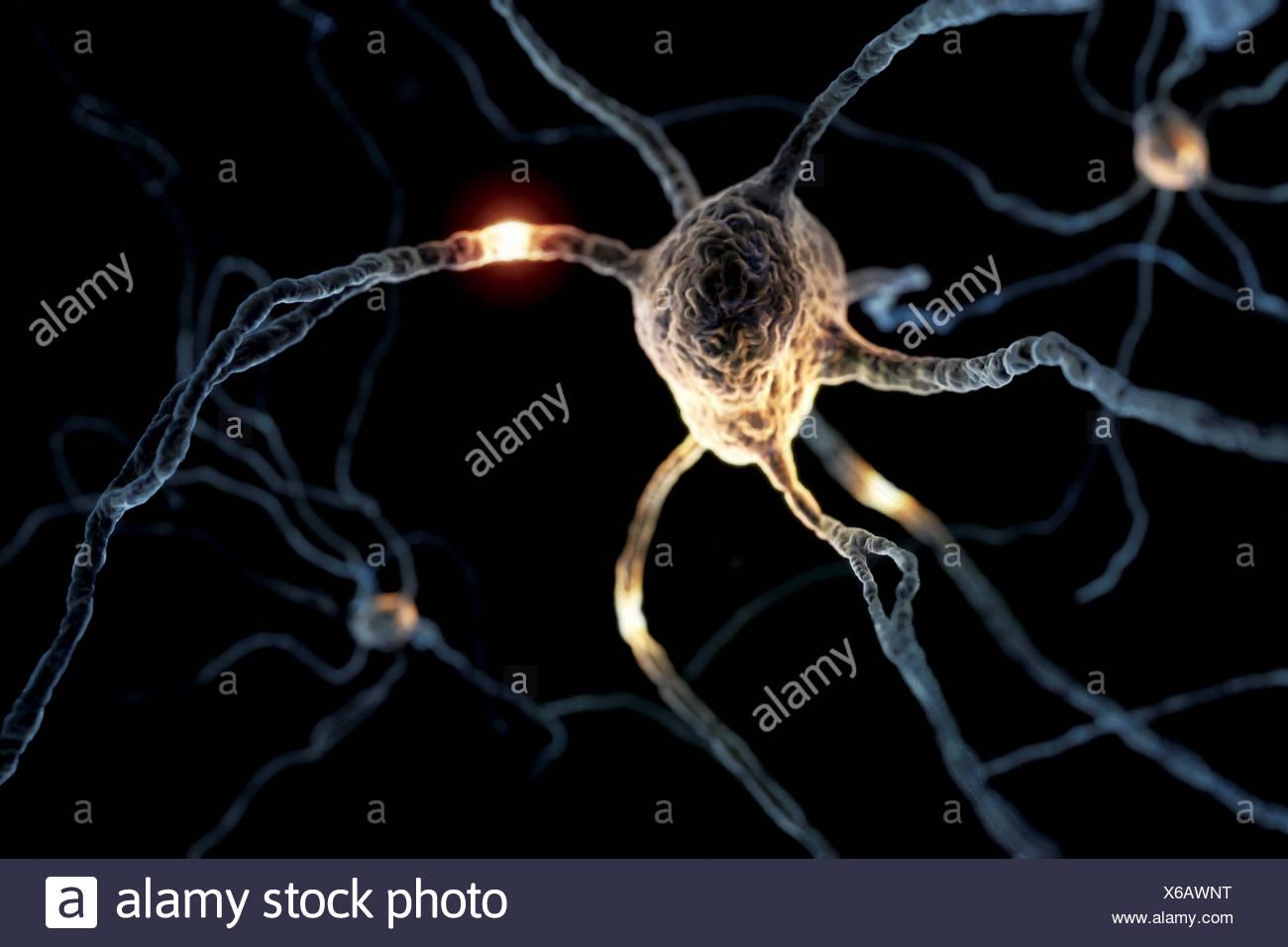 La visualisation de style microscopique des neurones. Photo Stock