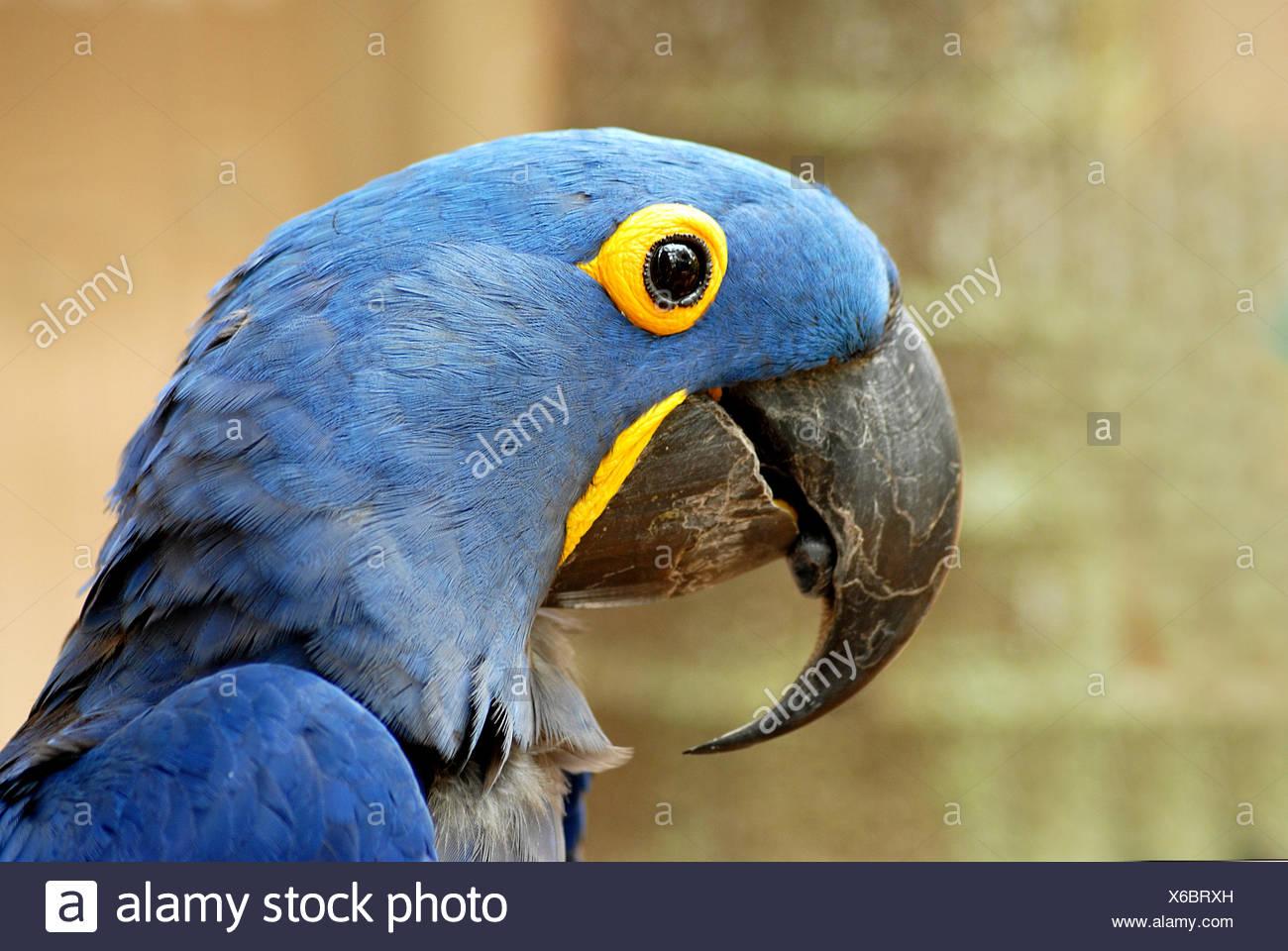 yeux oiseaux oiseau Photo Stock