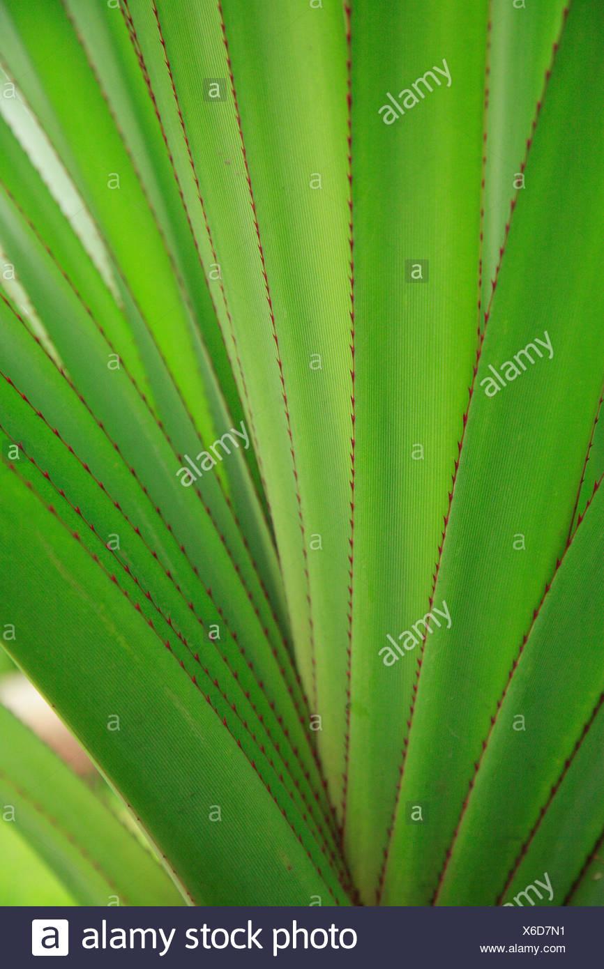 Plante, feuilles, diversifiée, Close up, irrégulières, striée, medium close-up, échantillon, structure, vert, vert pâle, Banque D'Images