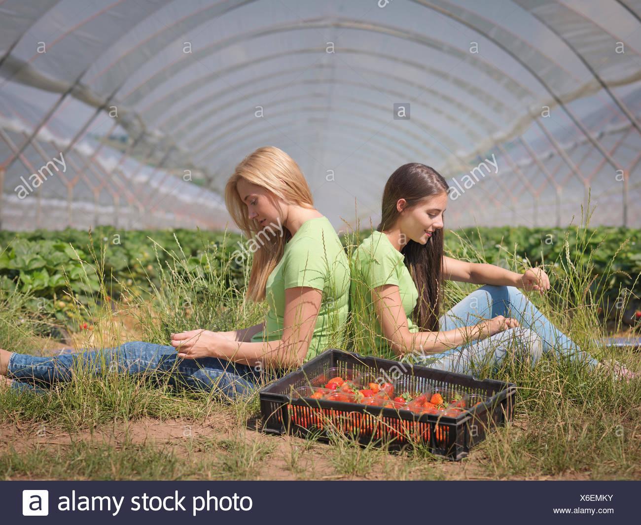Les cueilleurs de fraises près de repos polytunnel de fruit farm Photo Stock