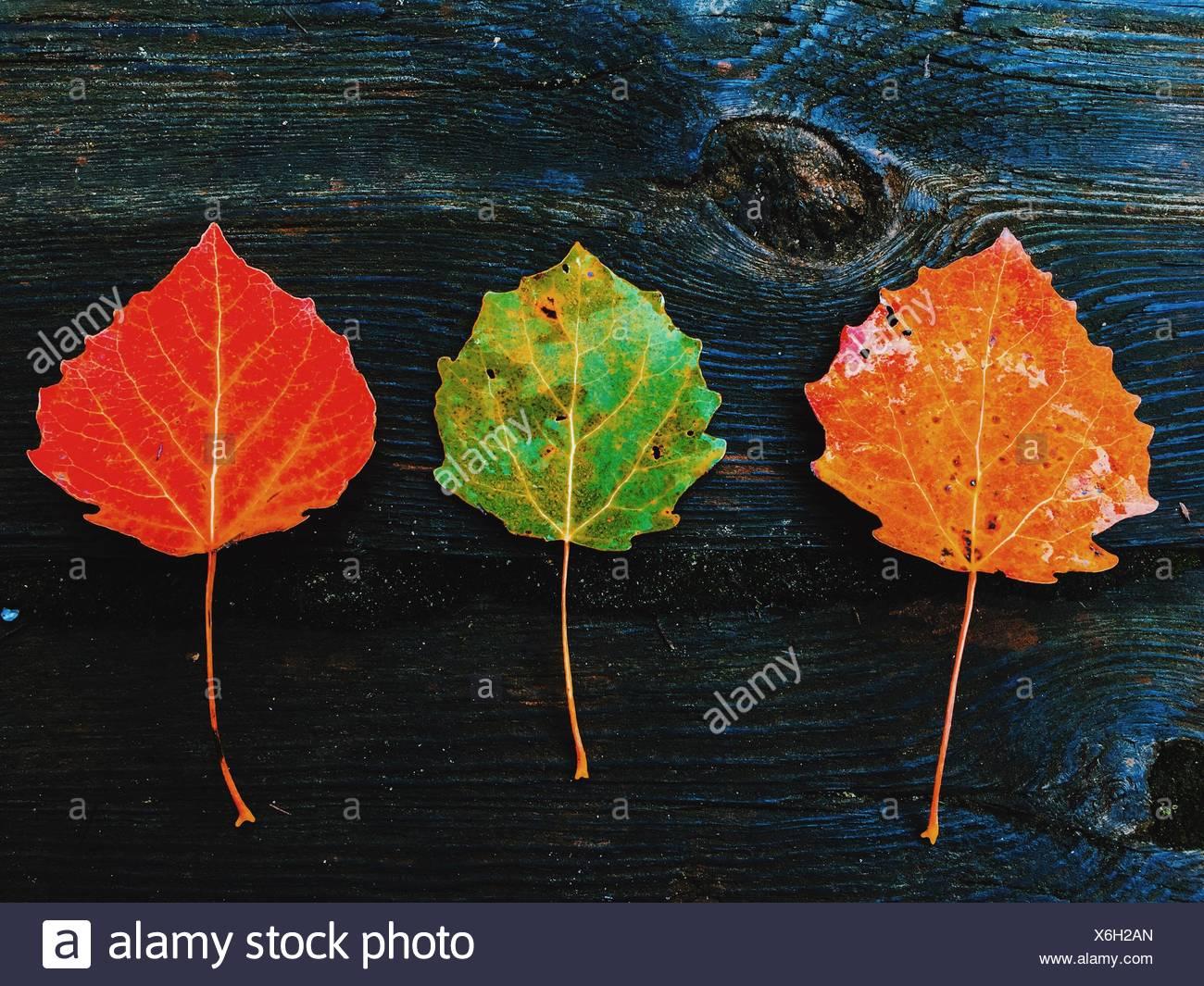 Plan de feuilles aux couleurs automnales sur bois Photo Stock