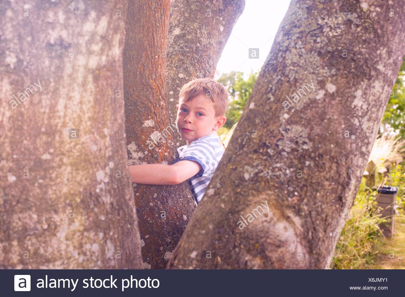 Portrait of boy entre les troncs des arbres Photo Stock