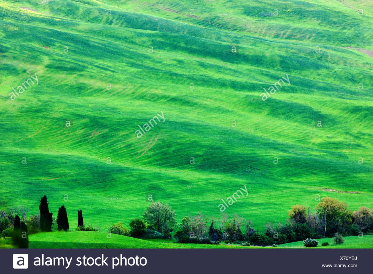 Paysage vert Photo Stock