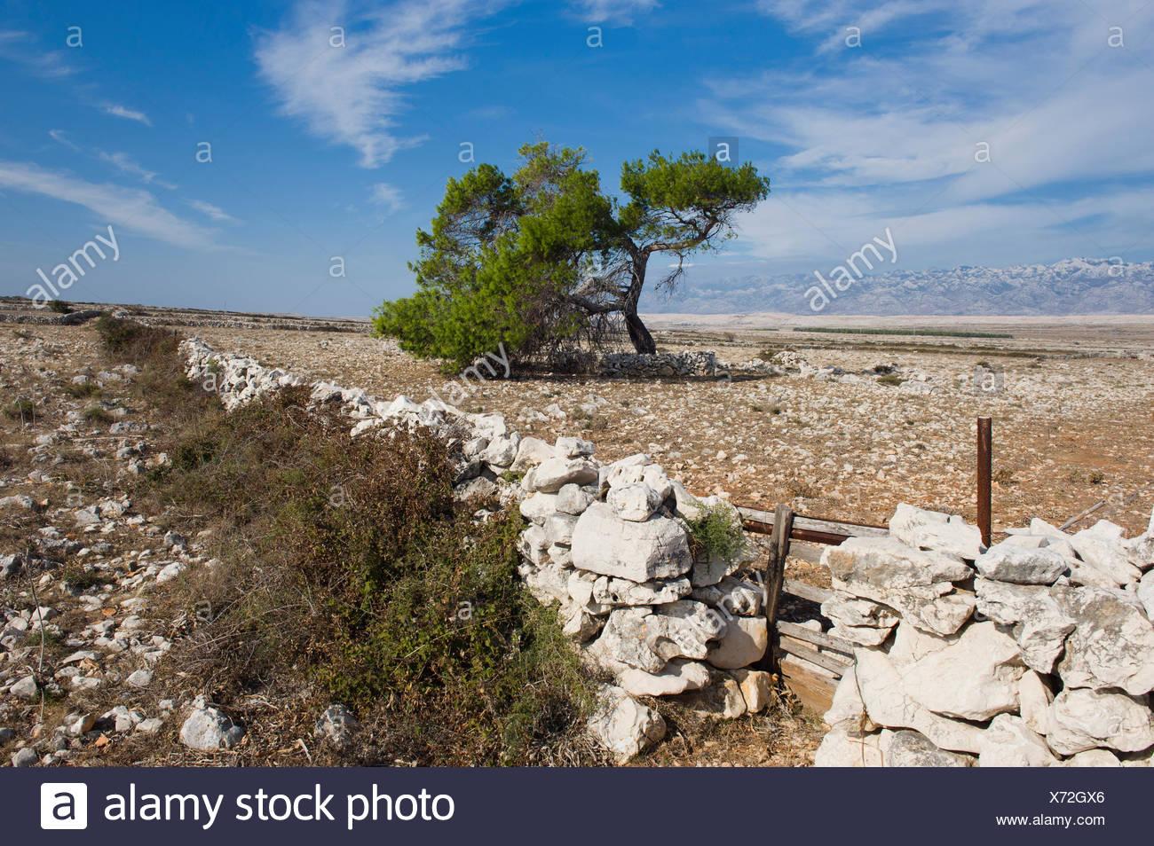 natural stone wall plants photos & natural stone wall plants images