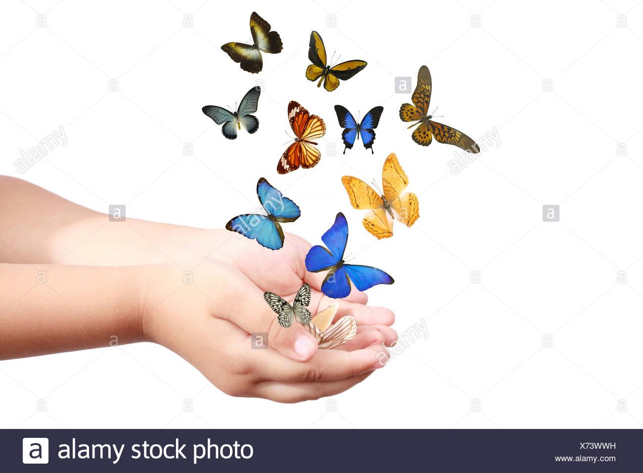 La main de l'enfant publie les papillons Photo Stock