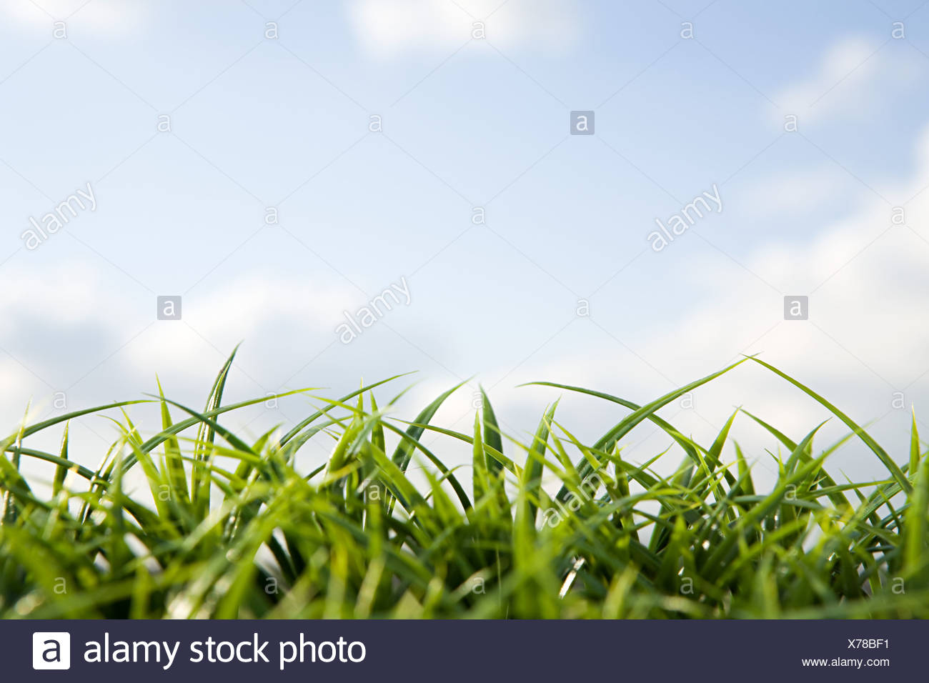 Close up d'herbe et de ciel Photo Stock
