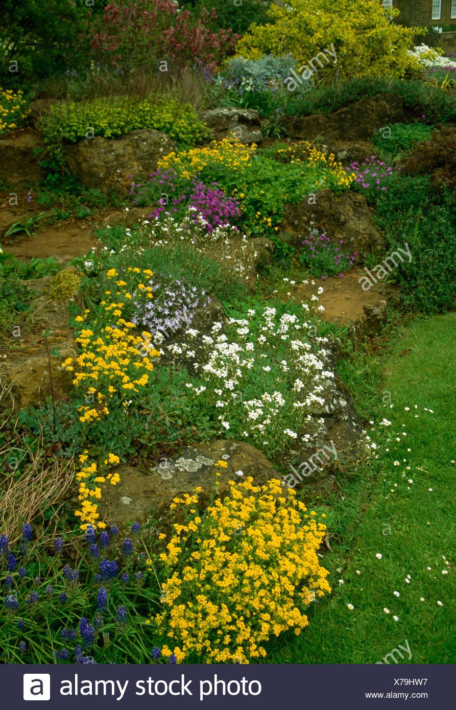 Jaune et blanc de printemps de rocaille plantes poussant dans les ...