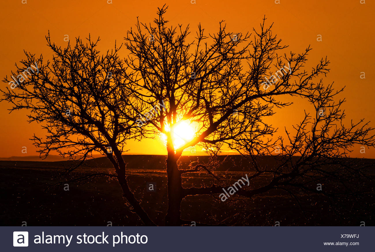 Arbre au coucher du soleil Photo Stock