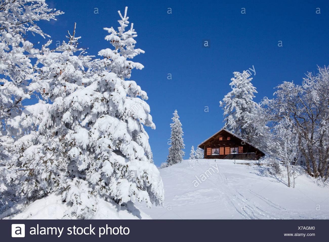Chalet d'été, bois d'hiver, montagne, montagne, paysage, paysage, hiver, canton, VD, Vaud, arbre, arbres, cabane, mountain house Photo Stock
