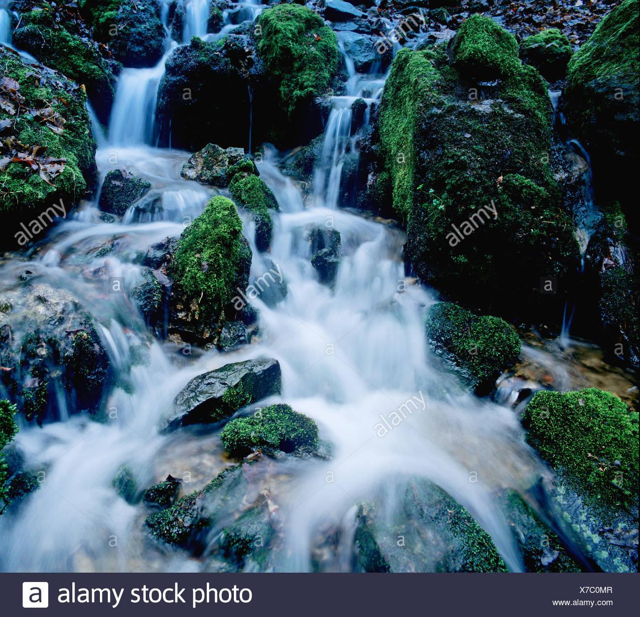 Feu de forêt moussue avec roches, eau, l'eau de fusion, Glasbach creek, Nordrhein-Westfalen, Germany, Europe Banque D'Images