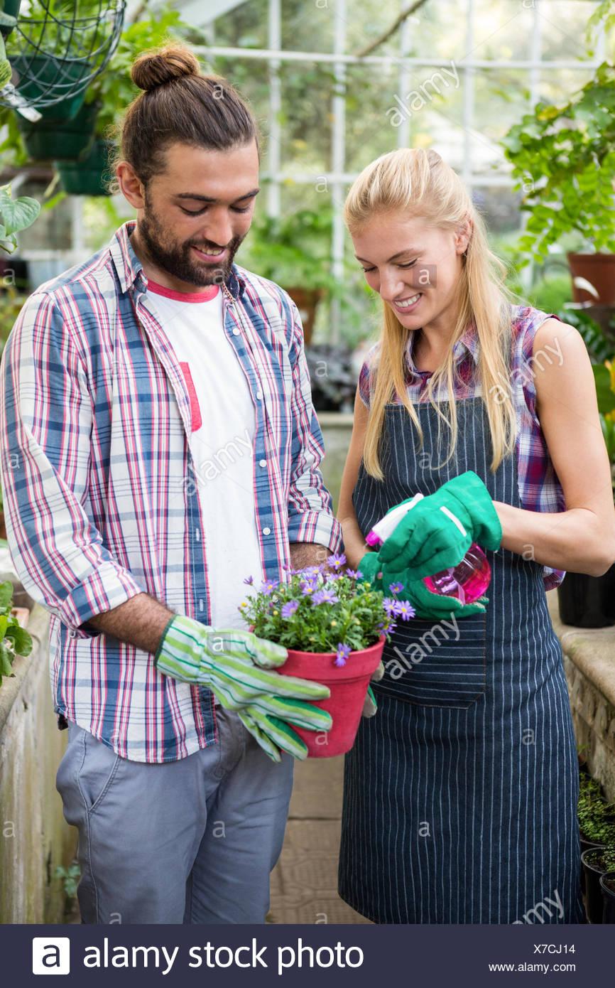 Heureux collègues pulvériser de l'eau sur la plante en pot à des émissions Banque D'Images