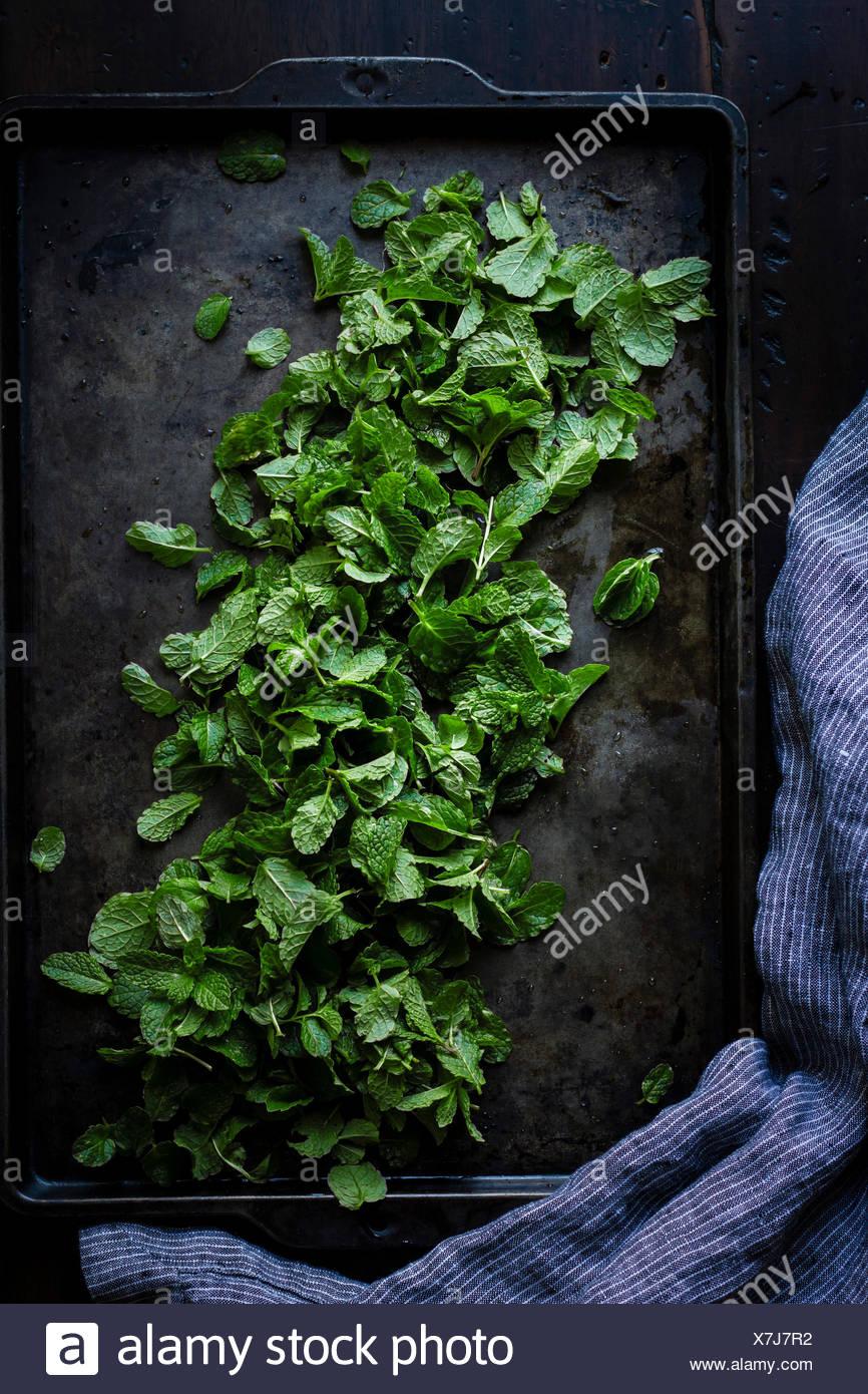 Menthe sur un bac de cuisson Photo Stock