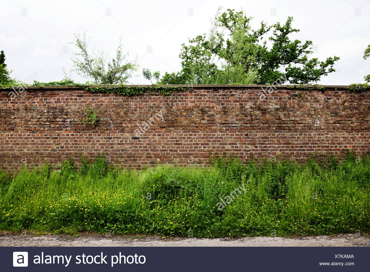 Mur de brique et de plantes Photo Stock