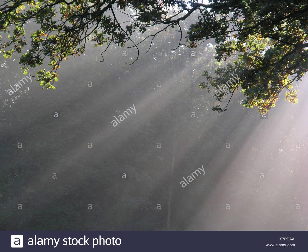 Branches des faisceaux de rayons soleil brouillard compensation rayons de soleil rayons de soleil bois Photo Stock