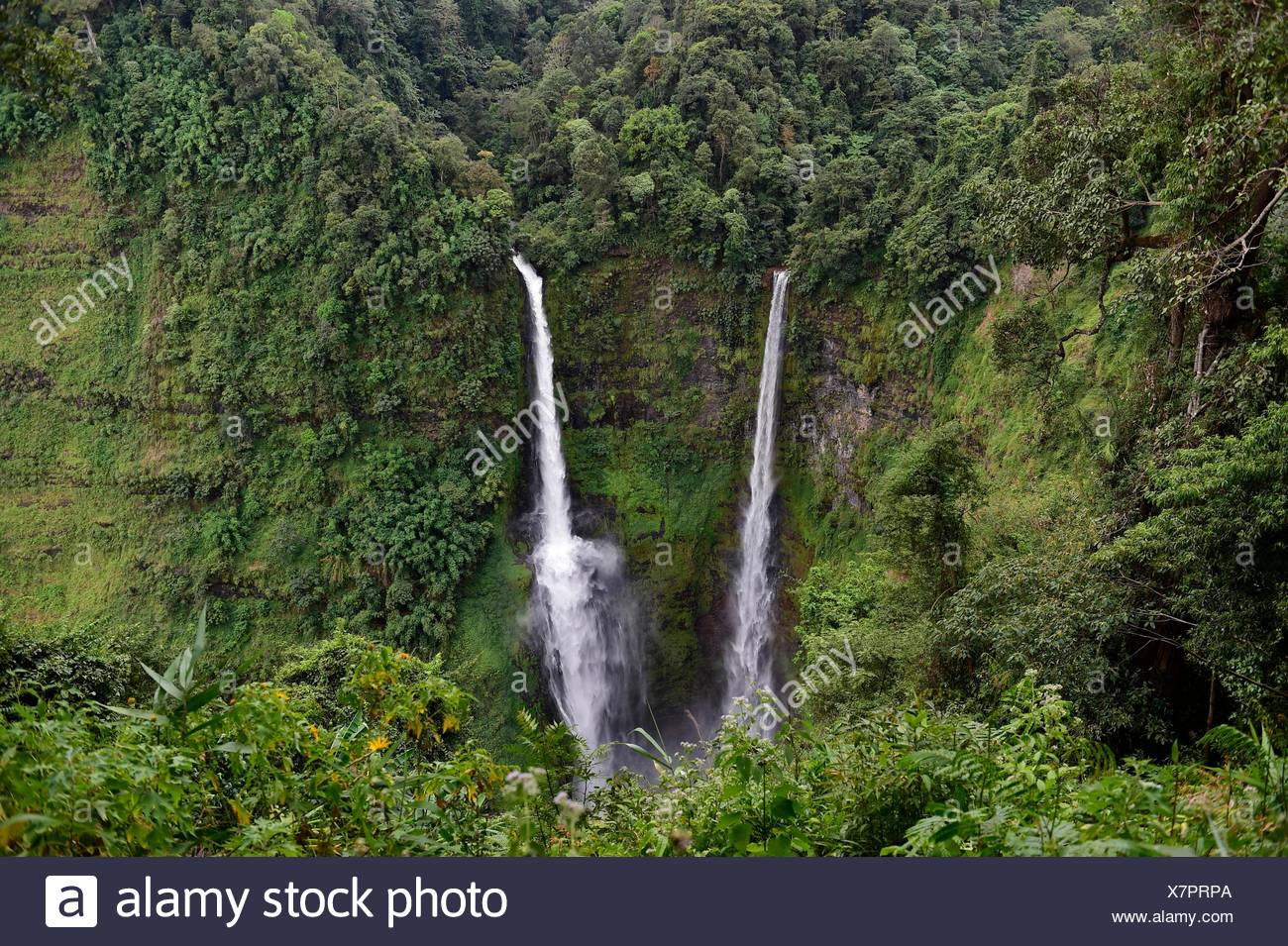 Cascade de Tad Fane,Plateau des Bolavens,Pakse Laos,,Asie du sud-est. Banque D'Images