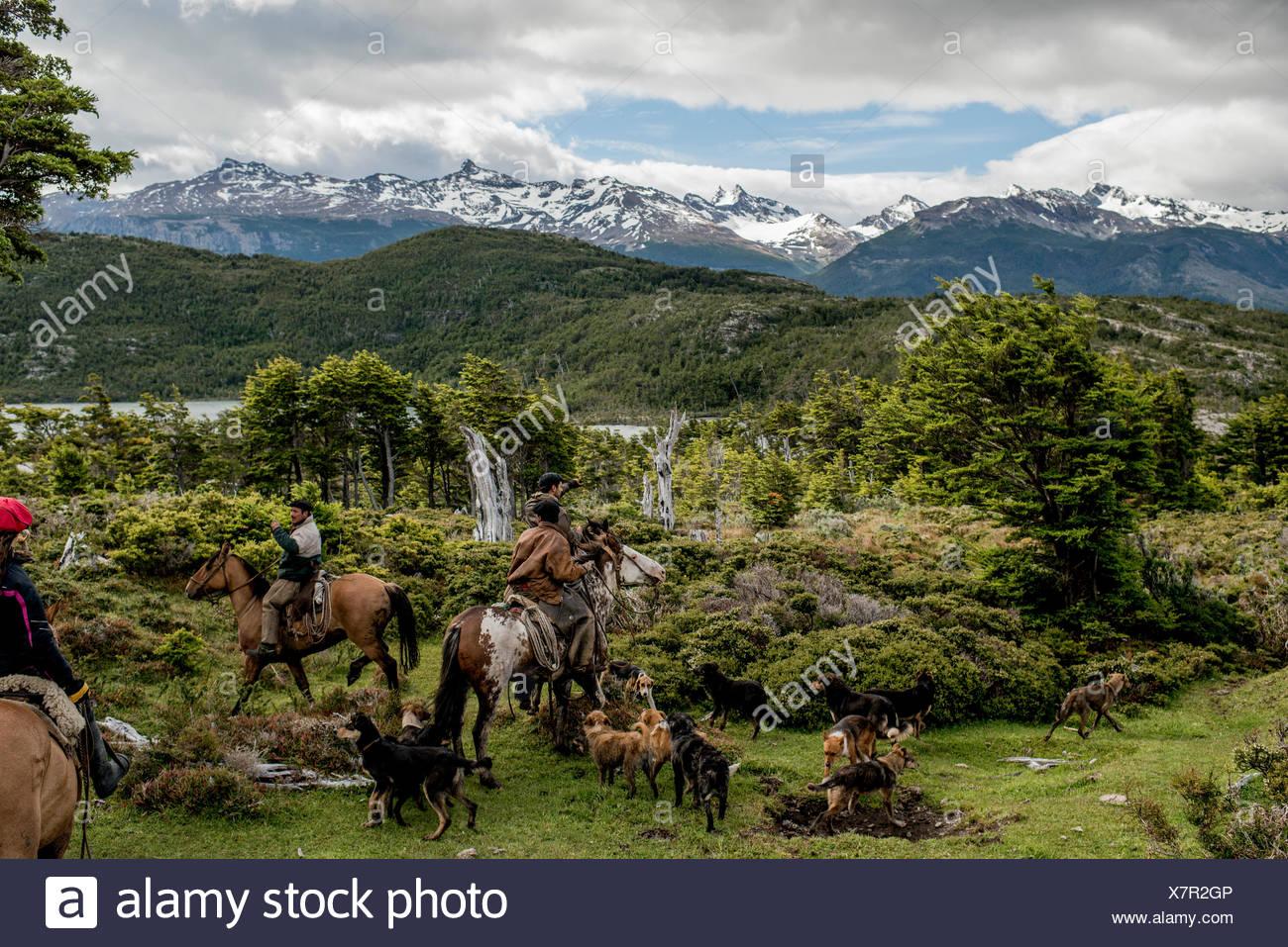 Bagualeros, cow-boys qui, de l'élevage sauvage capture en expédition avec leurs chiens. Banque D'Images