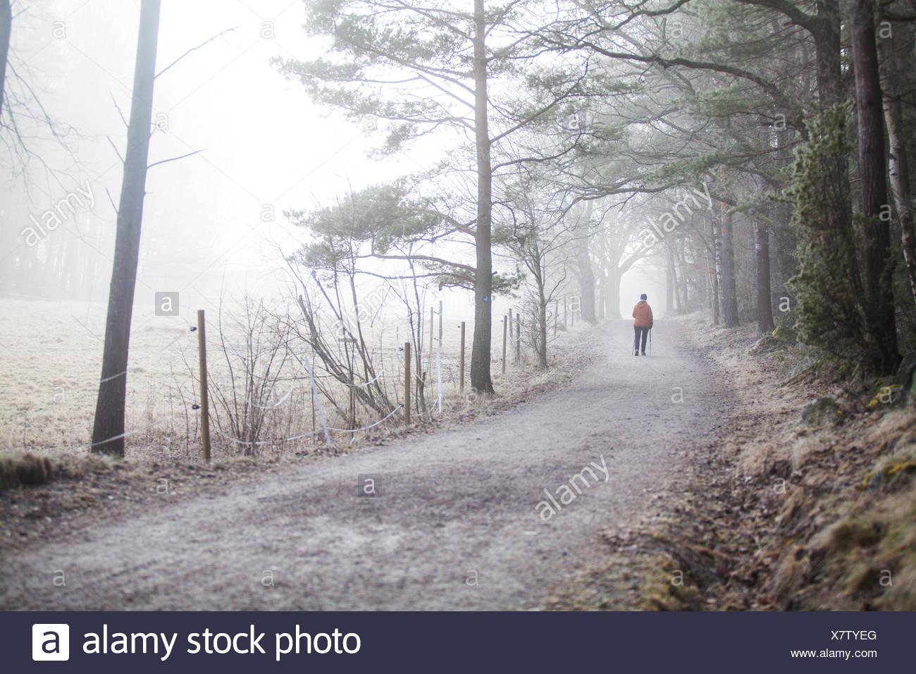 Un chemin de terre en Suède Photo Stock