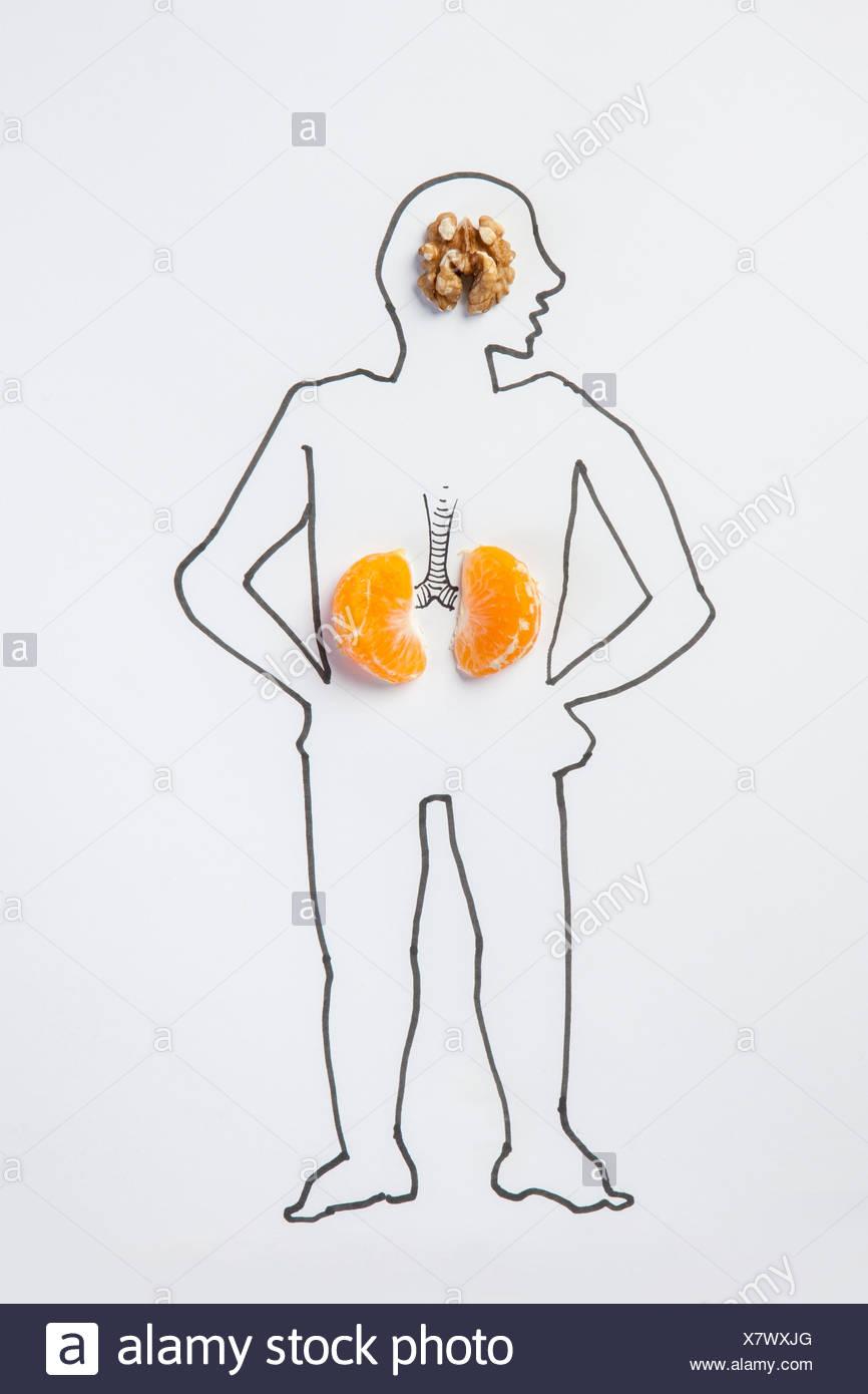 Illustration du corps humain avec le cerveau et le rein Banque D'Images