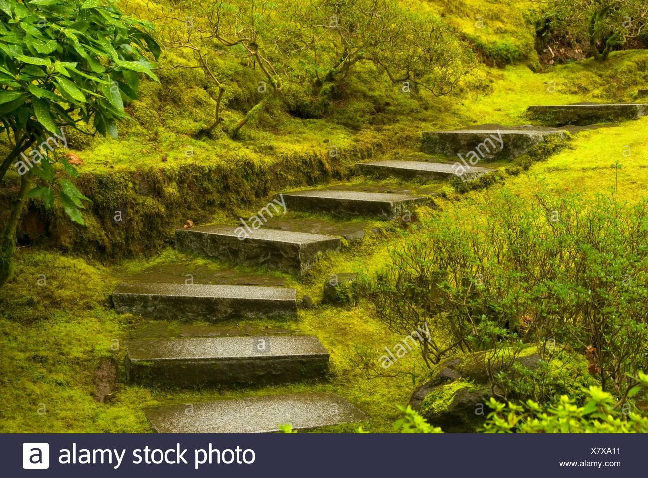 Escalier jardin naturel, le jardin japonais de Portland, Washington ...